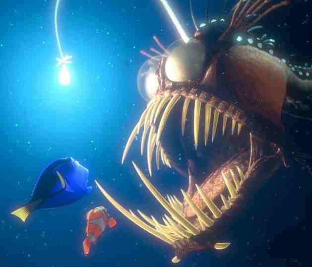 Finding nemo anglerfish rarest kind of best for What kind of fish is nemo